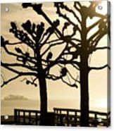 Sunrise Trees Acrylic Print by Tom Rickborn