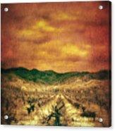Sunset Over Vineyard Acrylic Print by Jill Battaglia