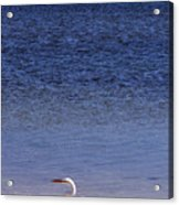 Sunshine Skyway Bridge With White Egret Acrylic Print by Rose  Hill
