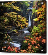 Surrounded By Fall Acrylic Print by Neil Shapiro