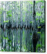 Swamp In Louisiana Acrylic Print by Ester  Rogers