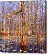 Swamp Tree Acrylic Print by Susanne Van Hulst