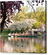 Swan Boats With Apple Blossoms Acrylic Print by Susan Cole Kelly