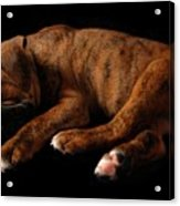 Sweet Dreams Puppy Acrylic Print by Angie Tirado-McKenzie