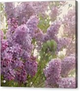 Swimming In A Sea Of Lilacs Acrylic Print by Cindy Garber Iverson