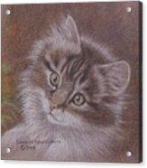 Tabby Kitten Acrylic Print by Dorothy Coatsworth