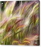 Tall Grass Acrylic Print by Marty Koch