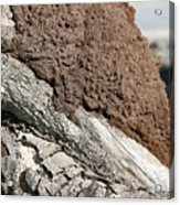 Termite Nest Acrylic Print by Steve Madore