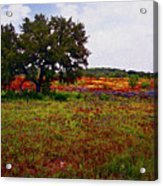 Texas Wildflowers Acrylic Print by Tamyra Ayles