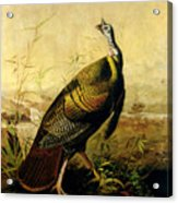 The American Wild Turkey Cock Acrylic Print by John James Audubon