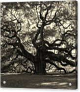 The Angel Oak Acrylic Print by Susanne Van Hulst