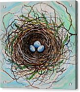 The Botanical Bird Nest Acrylic Print by Elizabeth Robinette Tyndall