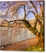 The Cherry Blossom Festival Acrylic Print by Lois Bryan