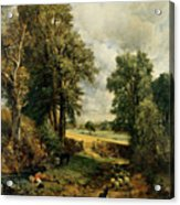 The Cornfield Acrylic Print by John Constable