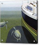 The Curiosity Of Sea Turtles Acrylic Print by Gary Giacomelli