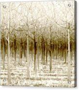 The Forest For The Trees Acrylic Print by Holly Kempe