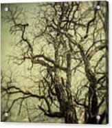The Haunted Tree Acrylic Print by Lisa Russo
