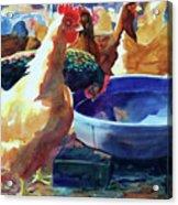 The Henhouse Watering Hole Acrylic Print by Kathy Braud