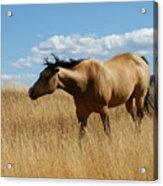 The Horse Acrylic Print by Ernie Echols