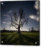 The Lonely Tree Acrylic Print by Angel  Tarantella