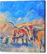 The Longhorns Acrylic Print by Jenn Cunningham