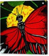 The Monarch Acrylic Print by Ramneek Narang