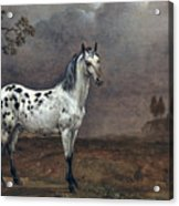 The Piebald Horse Acrylic Print by Paulus Potter