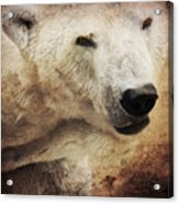 The Polar Bear Acrylic Print by Angela Doelling AD DESIGN Photo and PhotoArt