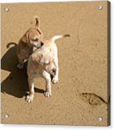 The Puppies Acrylic Print by Madeline Ellis