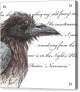 The Raven Acrylic Print by Tahirih Goffic