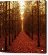 The Red Forest Acrylic Print by Amy Tyler