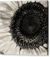 The Sunflower Acrylic Print by Michael Wade