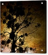 The Sunset Tree Acrylic Print by Loriental Photography