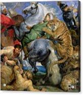 The Tiger Hunt Acrylic Print by Rubens