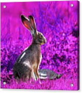 The Tortoise And The Hare . Magenta Square Acrylic Print by Wingsdomain Art and Photography