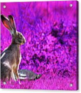 The Tortoise And The Hare . Magenta Acrylic Print by Wingsdomain Art and Photography