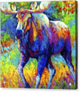 The Urge To Merge - Bull Moose Acrylic Print by Marion Rose