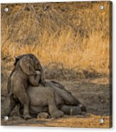 This Is Namibia No.  4 - Come On Bro I Wanna Play Acrylic Print by Paul W Sharpe Aka Wizard of Wonders