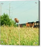 Thistle Rail Acrylic Print by Jame Hayes
