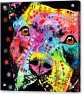 Thoughtful Pitbull I Heart U Acrylic Print by Dean Russo