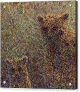 Three Bears Acrylic Print by James W Johnson