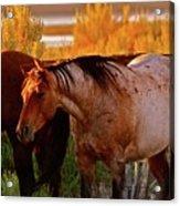 Three Horses Of A Suspicious Corral Acrylic Print by Gus McCrea