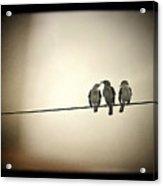 Three Little Birds Acrylic Print by Trish Mistric
