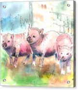 Three Little Pigs Acrylic Print by Arline Wagner