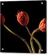 Three Rose Hips Acrylic Print by  Onyonet  Photo Studios