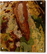 Tide Pool Acrylic Print by Harry Spitz