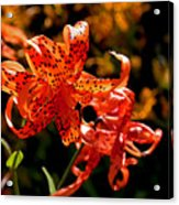 Tiger Lilies Acrylic Print by Rona Black
