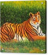 Tiger Acrylic Print by Lore Rossi
