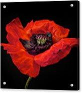 Tiny Dancer Poppy Acrylic Print by Toni Chanelle Paisley