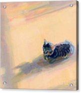 Tiny Kitten Big Dreams Acrylic Print by Kimberly Santini